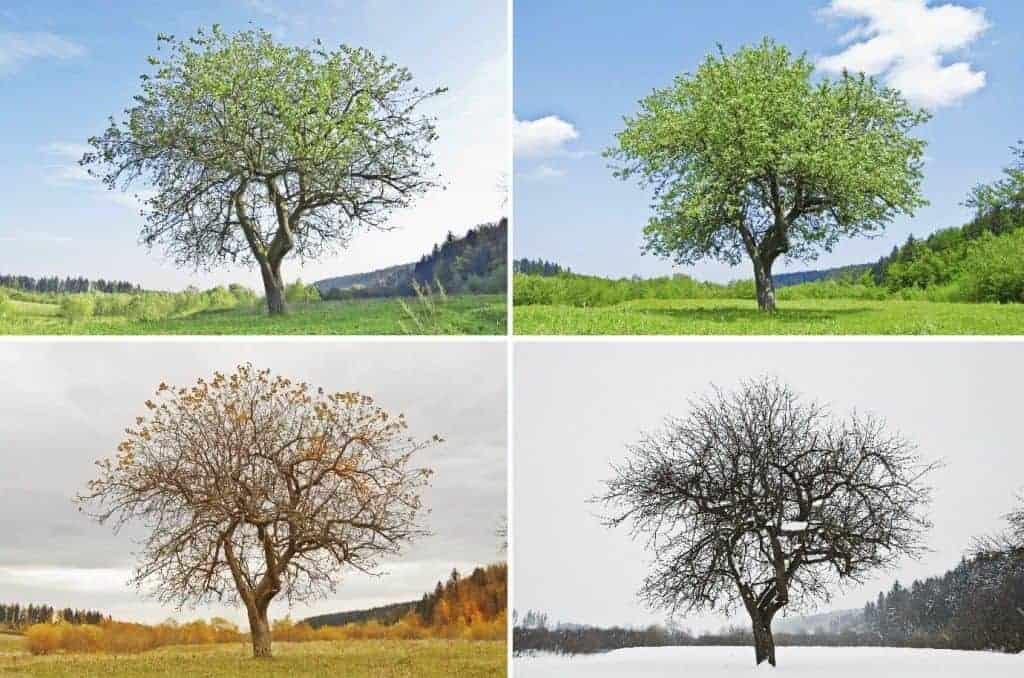 seasons-1024x678